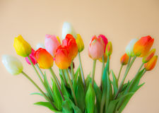 Tulip flower bouquet Royalty Free Stock Photo