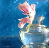 Tulip flower bouquet glass vase blue background reflection. Mirror bokeh sunlight Stock Photography