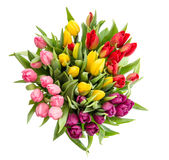 Tulip flower Bouquet isolated white background Stock Image