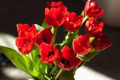 Tulip Flower Bouquet roja Imagenes de archivo