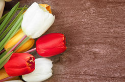 Tulip flower bouquet on weed texture background Stock Image