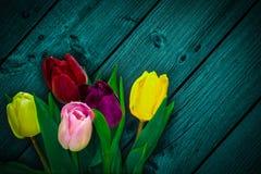 Tulip flower bouquet Stock Images