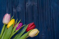 Tulip flower bouquet Royalty Free Stock Image