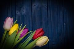 Tulip flower bouquet Stock Photo