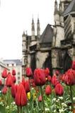 Tulip flower and the church Stock Photos