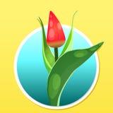 Tulip flower circle Stock Photo