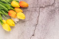 Tulip flower with crack white cement background spring concept Stock Photo