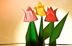 Tulip Flower Craft Royalty Free Stock Image