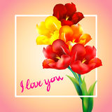 Tulip flower design background. Floral card art Stock Photography