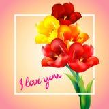 Tulip flower design background Stock Photography