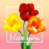 Tulip flower design background. Floral card art Stock Photo