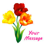 Tulip flower design background. Floral card art Stock Images