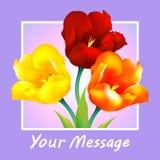 Tulip flower design background. Floral card art Stock Image