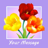 Tulip flower design background Stock Image