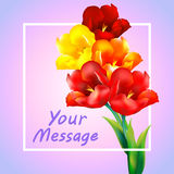 Tulip flower design background. Floral card art Royalty Free Stock Photos