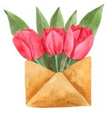Tulip Flower in Envelope watercolor isolated on white background , Hand drawn painted for Greeting Card ,Wallpaper. Postcards, Product,Packaging and more royalty free illustration