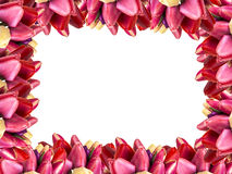 Tulip flower frame background Stock Images