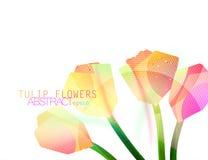Tulip flower geometric shape Royalty Free Stock Photos