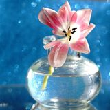 Tulip flower bouquet glass vase blue background bokeh textured. Tulip flower glass vase reflection blue background sunlight Royalty Free Stock Image