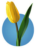 Tulip flower ( mesh) Royalty Free Stock Image