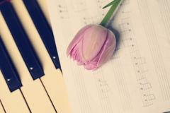 Tulip flower on musical instrument Stock Photography