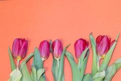 Tulip flower on orange background. Floral banner under the text. Orange background stock image