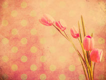 Tulip flower over pink polka dot wallpaper Royalty Free Stock Photo