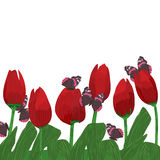 Tulip flower red butterfly. Illustration butterflies red tulip field background Stock Images