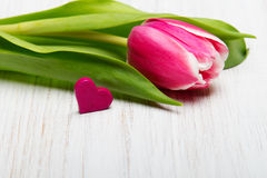 Tulip flower small heart on white wooden background Stock Photos