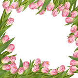 Tulip flower spring border. EPS 10 Royalty Free Stock Images