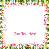 Tulip flower spring border isolated on whit Stock Images
