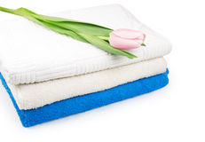 Tulip flower with towels isolated on white Royalty Free Stock Photo