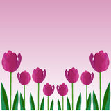 Tulip flower vector background Royalty Free Stock Photography