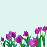 Tulip flower vector background Royalty Free Stock Photo
