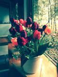 Tulip flower. Is vintage royalty free stock photos