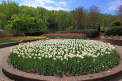 Tulip Flowerbed imagen de archivo libre de regalías