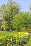 Tulip flowerbed in the park Stock Photo