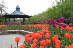 Tulip Flowerbed and Pavillion Royalty Free Stock Photography