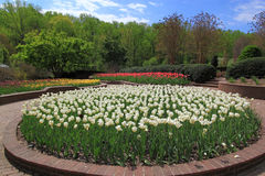 Tulip Flowerbed. Spring Garden with tulips flowerbed and pavilion Royalty Free Stock Image