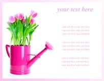 Free Tulip Flowers Stock Photos - 12922823