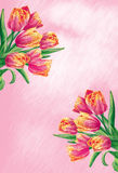 Tulip flowers. Spring flowers with drawing effect Stock Photos