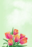 Tulip flowers. Spring flowers with drawing effect Royalty Free Stock Photography