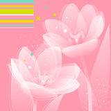 Tulip flowers background. Abstract spring background with delicate tulip flowers Royalty Free Stock Photo