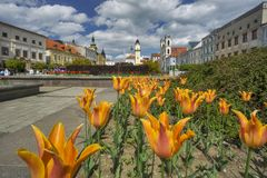 Tulip flowers at Banska Bystrica Stock Photography