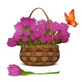 Tulip flowers in basket Stock Photo