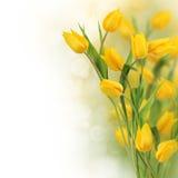 Tulip flowers border Royalty Free Stock Photos