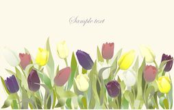 Tulip flowers border. Greeting card with tulips Royalty Free Stock Photography
