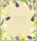 Tulip flowers border. Greeting card with tulips. Colorful fresh Royalty Free Stock Photos