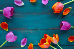 Tulip flowers bouquet assorted in oval shape Royalty Free Stock Image