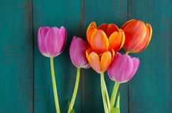 Tulip flowers bouquet background Stock Images